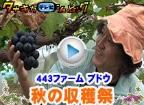 443ファーム 秋の収穫祭 〜シャインマスカット・ナガノパープル〜